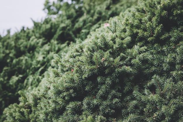 Schöne blühende grüne flora im garten, sommerhintergrund. fotografie magische blütenblätter auf unscharfem hintergrund