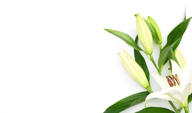 Schöne blühende lilienblume auf weiß