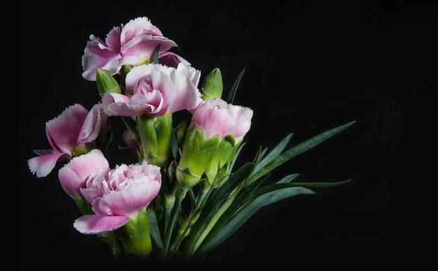 Schöne blühende nelkenblume auf einem schwarzen hintergrund