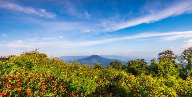 Schöne blume auf thailand