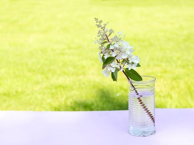 Schöne blume, hortensieniederlassung im klarglasvase