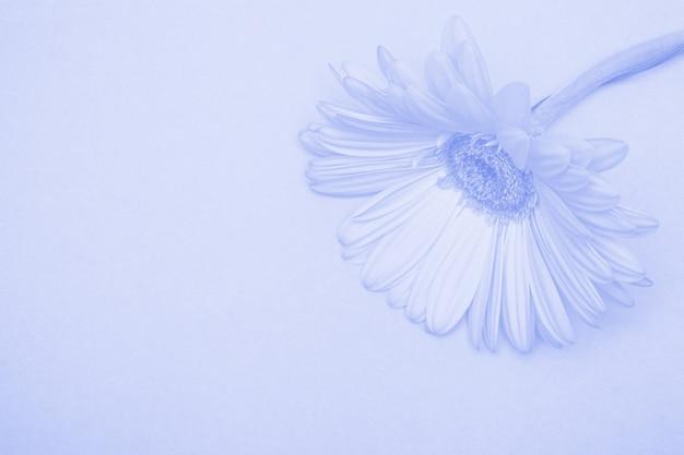 Schöne blume mit blauer tönung. blumenzusammensetzung