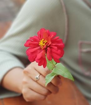 Schöne blume zinnia sonnenblume