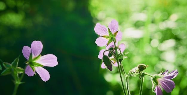 Schöne blumen am straßenrand, vielfalt der natur