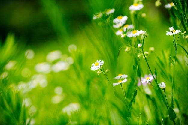 Schöne blumen auf einem sanften grünen hintergrund