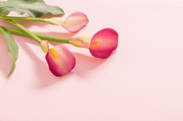 Schöne blumen der calla-lilie auf papierhintergrund