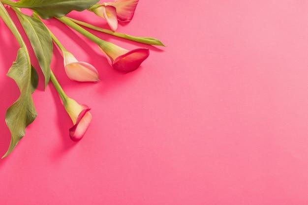 Schöne blumen der callalilie auf papierhintergrund