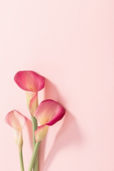 Schöne blumen der callalilie auf papieroberfläche