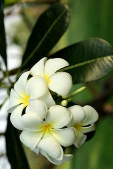 Schöne blumen im garten blühen im sommer
