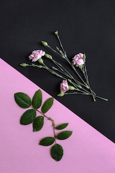 Schöne blumen und frische grüne blätter auf rosa und schwarzem hintergrund