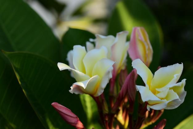 Schöne blumen und grüne blätter. grüne blätter mit dem schönen sonnenlicht verwendet als hintergrundbild.