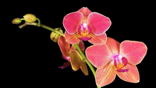 Schöne blumen und pflanzen um uns herum