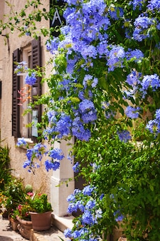 Schöne blumen und straßen im dorf saint-paul-de-vence in südfrankreich