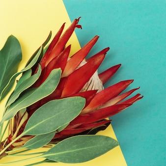 Schöne blumenproteapflanze mit roten blütenblättern