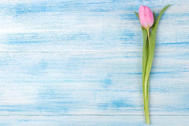 Schöne blumenrosa tulpe auf einer blauen holzoberfläche