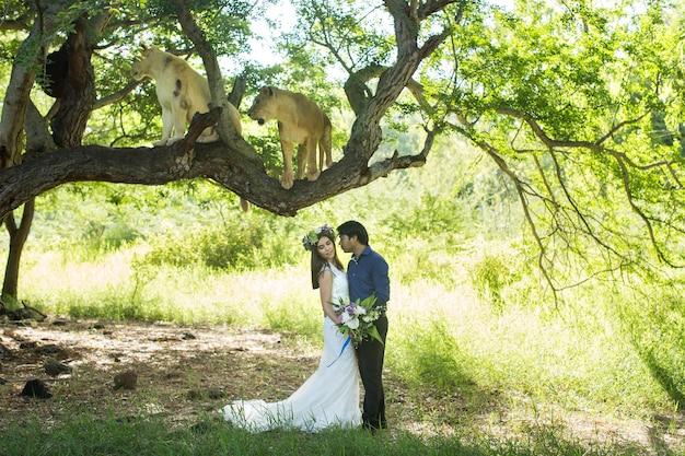 Schöne braut und bräutigam mit zwei löwinnen in der natur