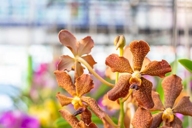 Schöne brown-orchidee und gemusterte stellen hintergrund verwischten blätter in einem sommergarten.