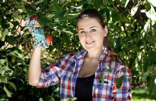 Schöne brünette frau in gartenhandschuhen, die äpfel vom baum pflücken
