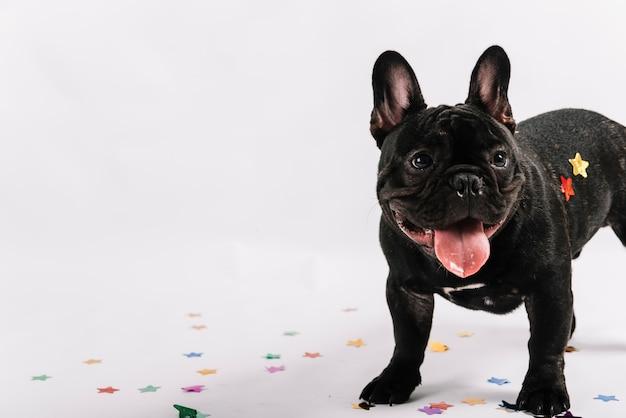 Schöne bulldogge posiert mit party-elementen