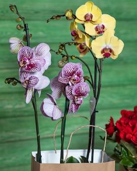 Schöne bunte orchidee, begonie in der einkaufstasche mit grünfläche