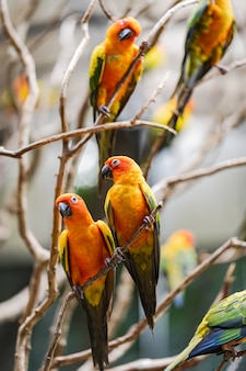 Schöne bunte papageienvögel sun conure
