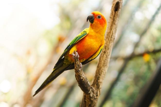 Schöne bunte sonne conure papageienvögel auf dem baumast