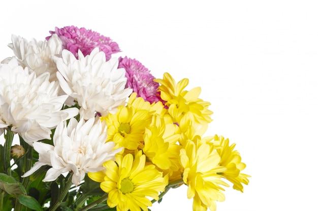 Schöne chrysantheme getrennt auf weiß