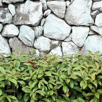 Schöne dekorative pflanze auf der steinmauer