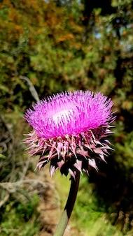 Schöne distelblume unter sonnenlicht