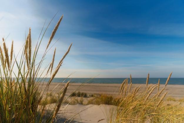 Schöne dünen und sand an der ostseeküste im winter