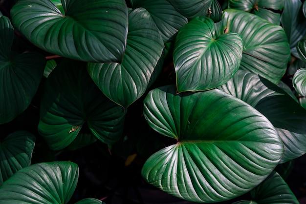 Schöne dunkelgrüne blätter in einem dschungel
