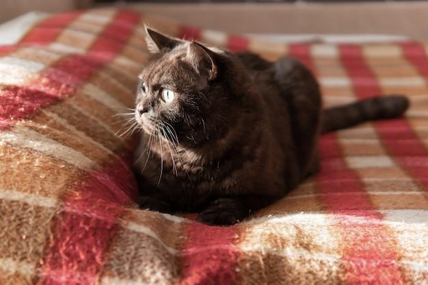 Schöne dunkle katze, die auf sofa sitzt