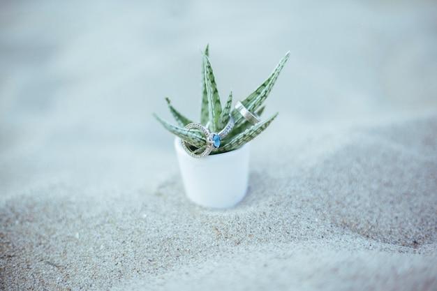 Schöne eheringe auf der oberseite des sukkulenten mit blauem diamanten