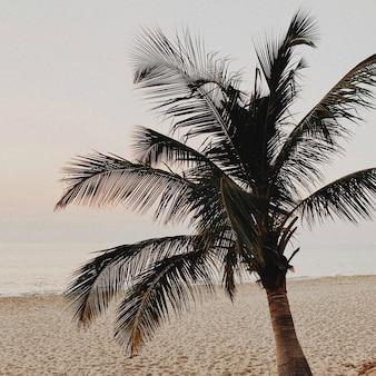 Schöne einsame tropische palme auf leerem strand mit meer bei herrlichem warmem gelbem sonnenuntergang