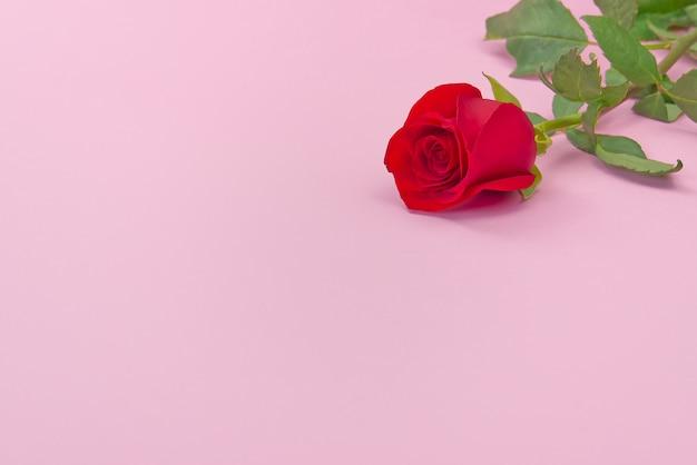 Schöne einzelne rose auf rosa hintergrund. das konzept des valentinstags, muttertag, 8. märz.