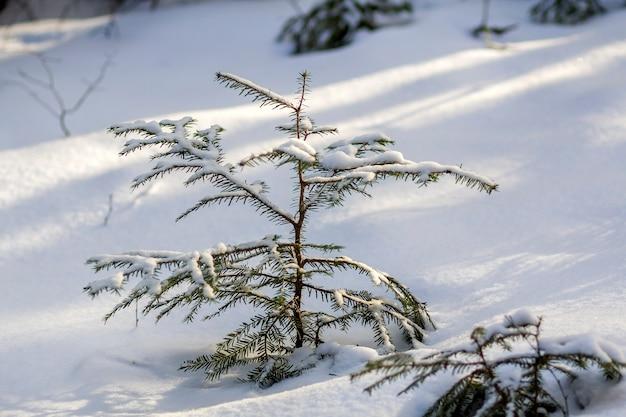 Schöne erstaunliche weihnachtswinterberglandschaft. kleine junge grüne tannenbäume bedeckt mit schnee und frost an kalten sonnigen tagen auf klarem weißem schnee und verschwommenen baumstämmen kopieren raumhintergrund.