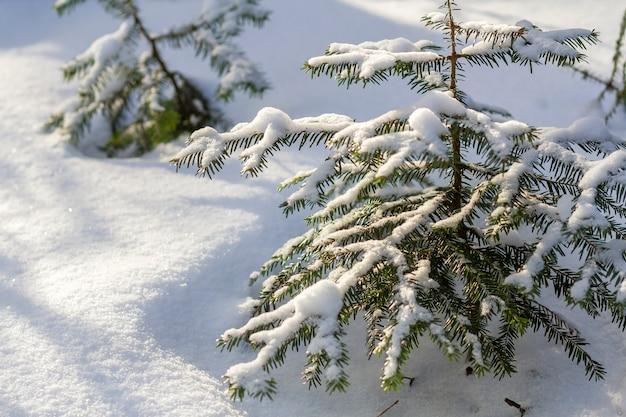Schöne erstaunliche weihnachtswinterberglandschaft. kleine junge grüne tannenbäume bedeckt mit schnee