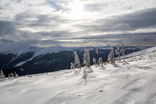 Schöne erstaunliche winterlandschaft. kleine junge bäume bedeckt mit schnee und frost am kalten sonnigen tag auf kopierraumhintergrund des holzigen schneebedeckten bergrückens und des bewölkten stürmischen himmels.