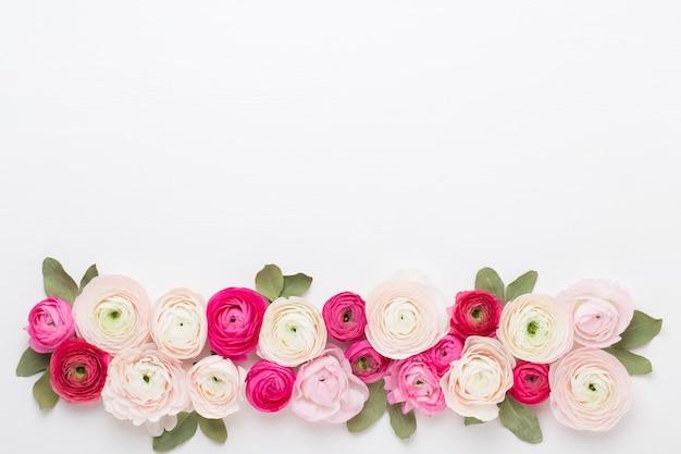 Schöne farbige ranunkelblüten auf einem weiß.