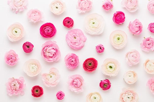 Schöne farbige ranunkelblüten auf einer weißen wand