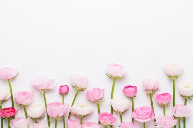 Schöne farbige ranunkelblüten isoliert