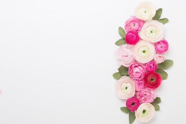 Schöne farbige ranunkelblüten