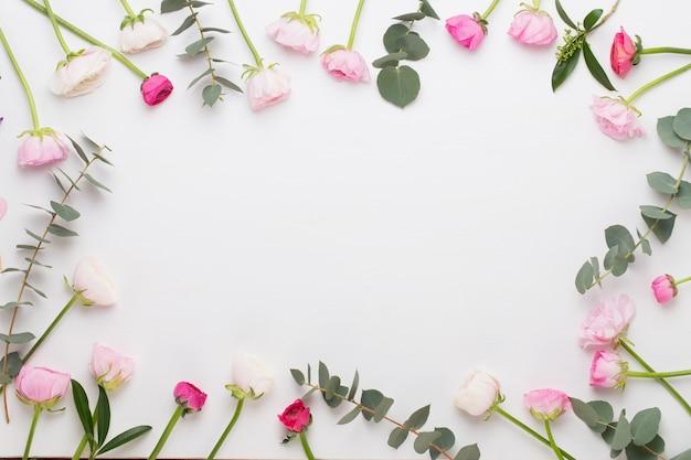 Schöne farbige ranunkelblumen auf einem weißen hintergrund. frühlingsgrußkarte.