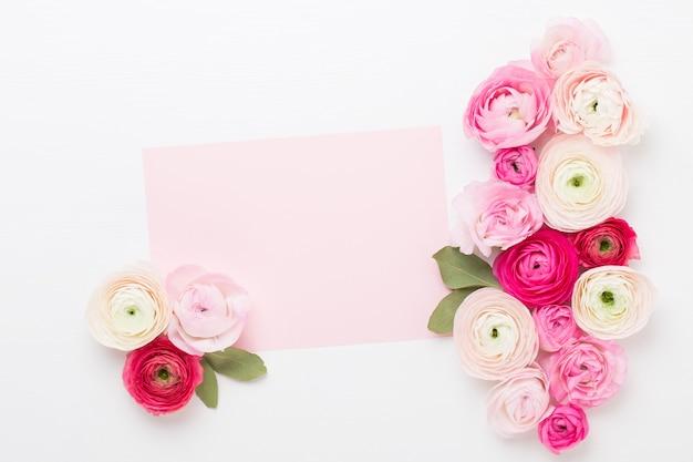 Schöne farbige ranunkelblumen auf einem weißen hintergrund. valentinstag grußkarte.