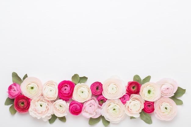 Schöne farbige ranunkelblumen auf einem weißen hintergrund.