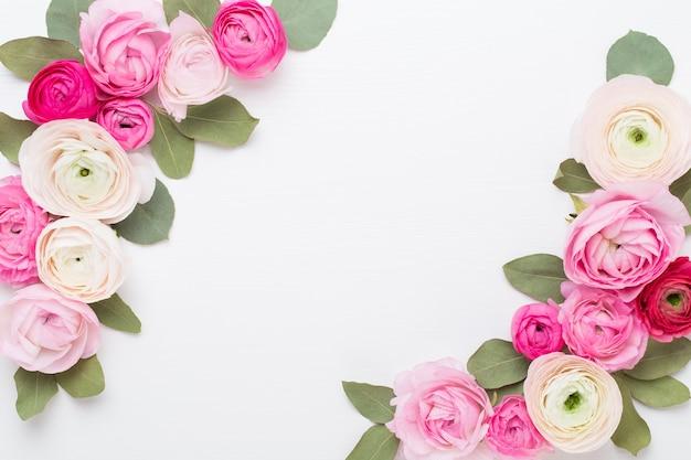 Schöne farbige ranunkelnblüten auf weißem hintergrund. valentinstag-grußkarte.