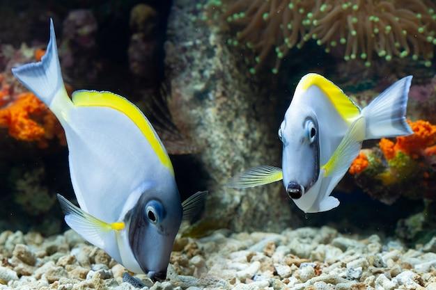 Schöne fische auf dem meeresboden und korallenriffen unterwasserschönheit von fischen und korallenriffen