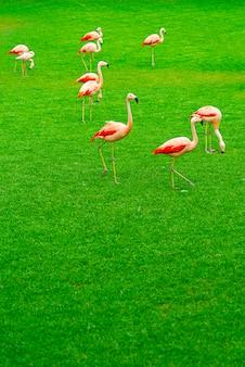 Schöne flamingogruppe, die auf dem gras im park geht