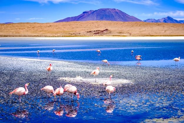 Schöne flamingos an der sonnenlagune im bergigen bolivien