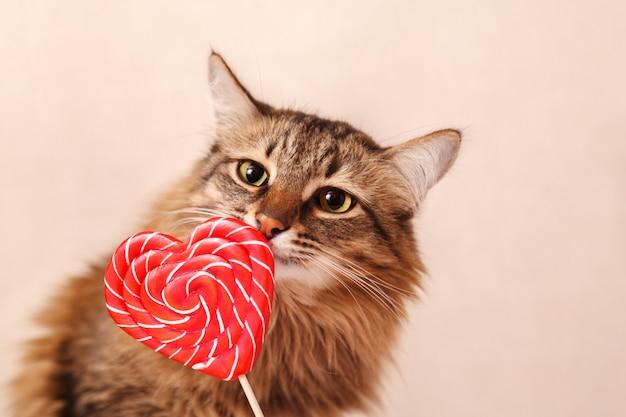 Schöne flauschige katze schnüffelt einen herzförmigen lutscher